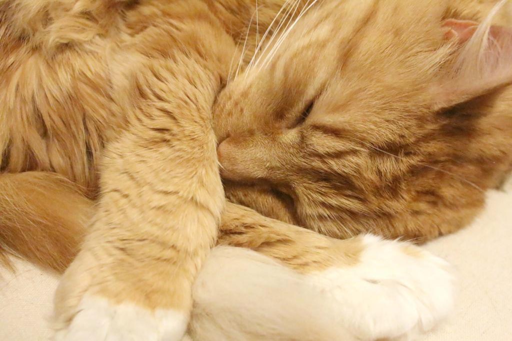 Pet Corner : Our (Not So) Little Lola